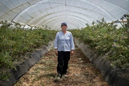 Ángela Rodríguez, en el invernadero donde trabaja tras perder sus ingresos como gestora de viviendas turísticas en Airbnb.