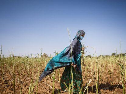 Fatuma Abdi Dalmar ha sido agricultora toda su vida. Sus cultivos se han visto gravemente afectados por la invasión de enjambres de langostas. Los perdió casi todos.