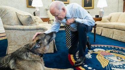 Champ, uno de los perros del presidente Joe Biden.