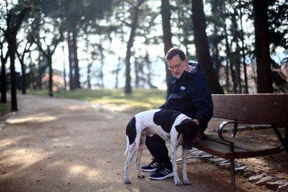 El candidato del Partido Popular a la Presidencia del Gobierno, Mariano Rajoy, pasea junto a su perro por los jardines del Palacio de La Moncloa.