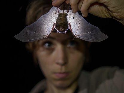 La zoóloga británica Alice Hughes examina un murciélago.