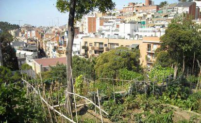 Plantación urbana de 'Hort de l'avi', en Barcelona.