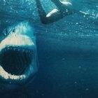 Imagen de 'Tiburón blanco'.