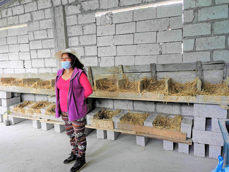 Sandra Arequipa y su hijo, ecuatorianos ambos, fueron incluidos en un programa de retorno productivo que entrega ayudas financieras a los migrantes que deciden volver a sus países de origen. Con ese apoyo montaron un gallinero de aves ponedoras.