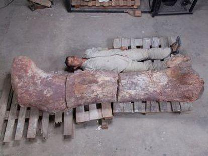 Herbívoro, de unos 40 metros de longitud y 80 toneladas de peso, este dinosaurio vivió hace 100 millones de años en la Patagonia argentina