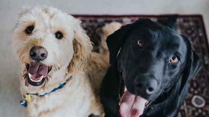 Una imagen del programa 'The Dog House'.