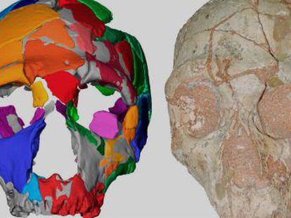 Un polémico estudio sugiere que los  sapiens  migraron a Europa mucho antes de lo que se creía y fueron reemplazados por neandertales