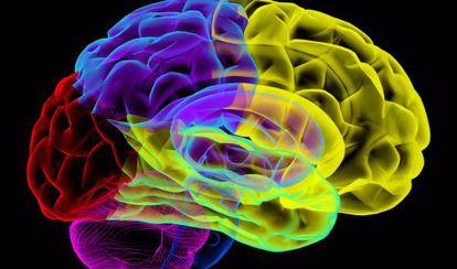 El mapa del cerebro todavía es un arcano.