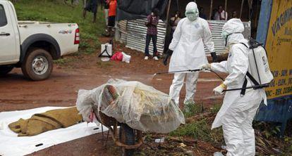 Varias enfermeras liberianas desinfectan una víctima del ébola en la calle en una calle en Virginia, a las afueras de la capital Monrovia, en Liberia.