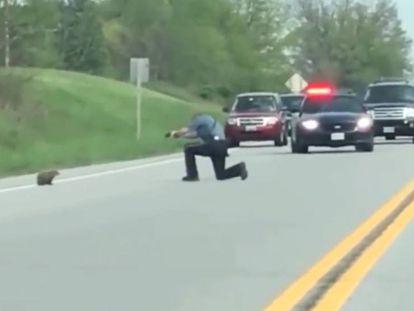 Un policía dispara a una marmota a sangre fría en mitad de una carretera