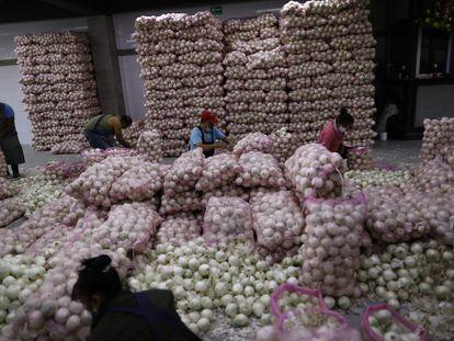 Trabajadores de la central de abastos de Ciudad de México laboran ordenando la cebolla proveniente del norte del país.