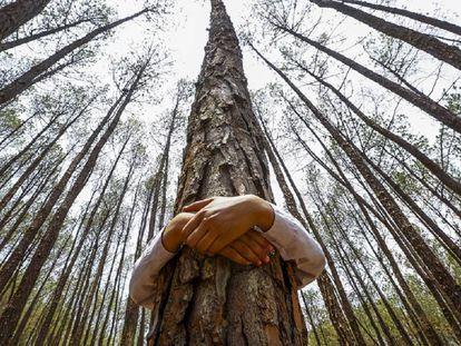 Un niño abraza un árbol para celebrar el Día Mundial del Medio Ambiente, en el bosque de Gokarna, en Katmandú (Nepal)