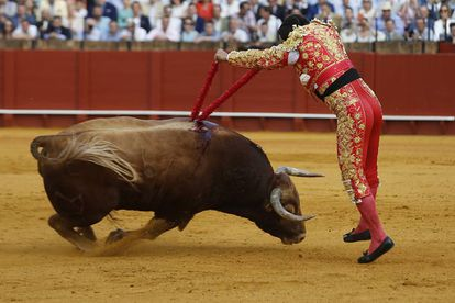 El diestro Morante de la Puebla, pone las banderillas a su segundo toro en la Real Maestranza de Sevilla.