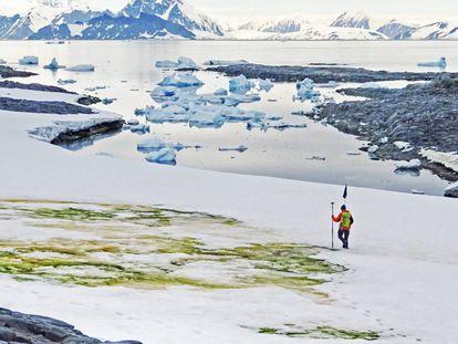 El investigador británico Andrew Gray, pasa ante un florecimiento de algas en la Isla Anchorange de la Antártida.