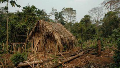 Cabaña de paja del hombre del agujero, en el territorio indígena Tanaru del estado brasileño de Rondônia.
