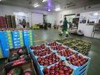 Dvd 1018  8/9/20Almacenes y dependencias de la empresa marroquí de frutas Azahara en la población de Griñón (Madrid).KIKE PARA.