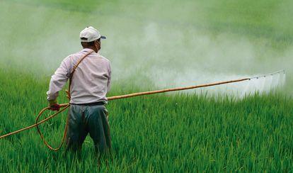 Un hombre vierte plaguicida sobre un cultivo en México el pasado agosto.