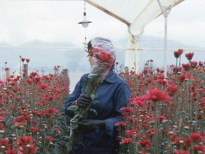 Una imagen de 'Amor mujeres y flores', de la colombiana Marta Rodríguez.