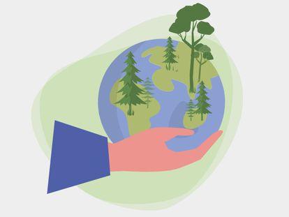 Bosques sostenibles, el modelo forestal que salvará el planeta