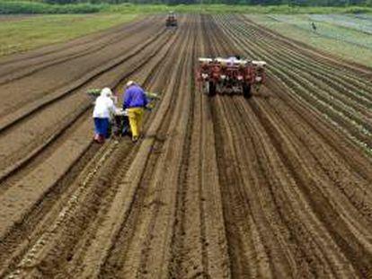 """Se trata de la tercera edición del programa MAP (Mejora del Ambiente Productivo), que tiene por objeto mejorar la gestión de riesgos en el sector agrícola y desarrollar nuevos instrumentos para mitigar los riesgos de seguridad alimentaria, así como """"promover la inversión productiva"""". EFE/Archivo"""