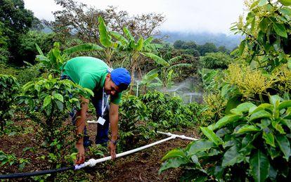 Jesús Díaz, estudiante de ingeniería forestal, enciende los aspersores de bajo coste que ha diseñado junto a su equipo.