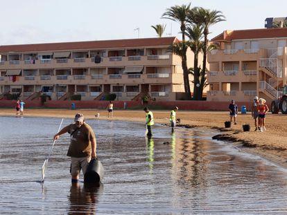 Operarios en las labores de limpieza en la playa de Puerto Bello de La Manga del Mar Menor (Murcia).