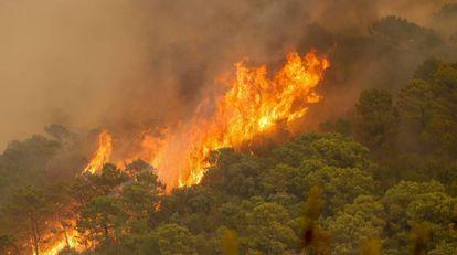 Incendio forestal de Sierra Bermeja, en Estepona (Málaga). EUROPA PRESS