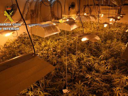 Una plantación de marihuana en una imagen de archivo.