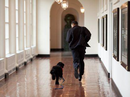 Obama camina por uno de los pasillos del Ala Este de la Casa Blanca acompañado de Bo, el perro de la familia, en 2009.