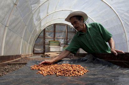 Un productor de cacao en Honduras