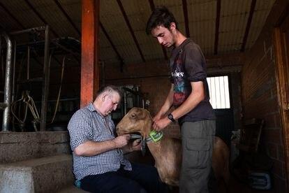 Alejandro Torralvo instala un dispositivo GPS a una de sus cabras con ayuda de su padre Florián Torralvo.