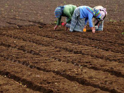 Tres mujeres trabajan la tierra en una granja de Chimaltenango, Guatemala.