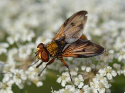 Centenares de especies polinizadoras están intentando acompasar su emergencia a la de las flores