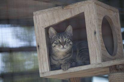 Un gato acogido en un centro de protección animal.