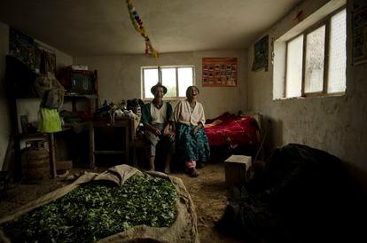 Familia de agricultores de hoja de coca en Las Yungas, Bolivia.