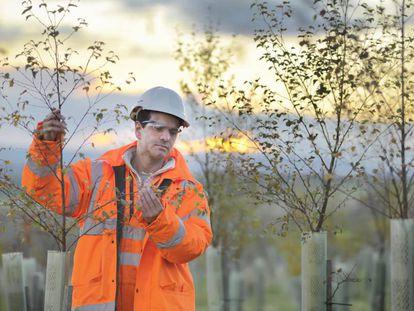 Un ecólogo inspecciona árboles.