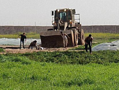 Una excavadora recoge el cadáver de un palestino abatido por el Ejército israelí el pasado domingo en Gaza.