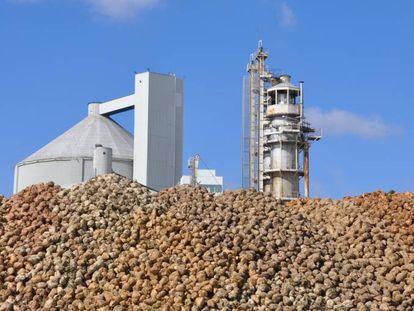 Montañas de remolacha azucarera ante una de las plantas de procesado.