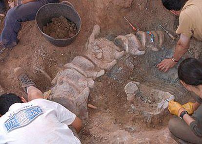 Excavación de un nuevo dinosaurio en el yacimiento del Oterillo (Burgos).