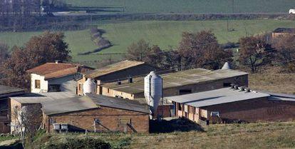 Una explotación porcina en la comarca de Osona.