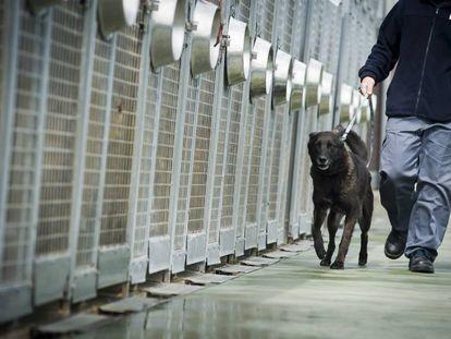Un trabajador del Centro de Recogida de Animales traslada a un perro.
