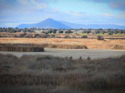 Tablazos centrales secos del humedal del Parque Nacional de las Tablas de Daimiel.