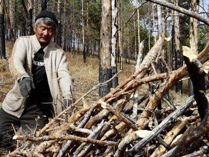 Un miembro de un grupo de usuarios de bosque en Tsagaan Uur (Mongolia) retira ramas para evitar incendios.