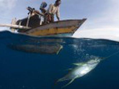 Un estudio destapa que el 30% de las capturas mundiales no se comunica a Naciones Unidas