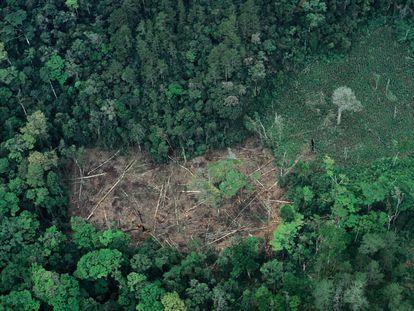 Deforestación en el Estado mexicano de Chiapas.
