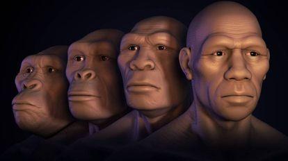 Varios estados de la evolución humana.
