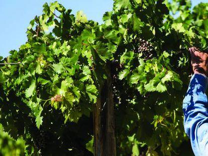 Fecovita es la única cooperativa vitivinícola entre las mayores firmas del sector en el mundo.