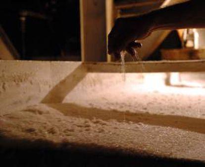A Honduras le corresponde una cuota de exportación de 19.400 toneladas anuales de azúcar, que permitirá al país centroamericano captar unos 40 millones de dólares principalmente por ventas a Alemania, Bélgica, Italia y Grecia. EFE/Archivo