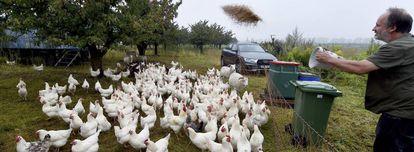 Una explotación de gallinas ecológica en Alemania, uno de los países donde este tipo de producto tiene más predicamento.