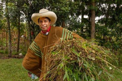 El candidato Pedro Castillo retorna a su casa luego de recoger follaje en el campo, a finales de mayo.